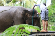Elephant gets a bath, Elephant Safari Park, Bali Indonesia