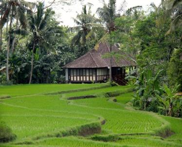 Rice field, Ubud, Bali, Indonesia