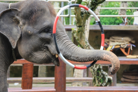 Elephant with Hula Hoop